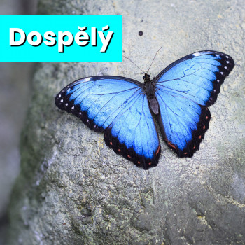 Vstupenka do Motýlího domu - dospělý
